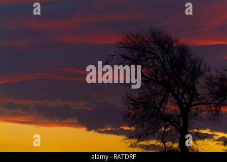 Lonely tree at sunset, Apulia, Italy - Stock Image