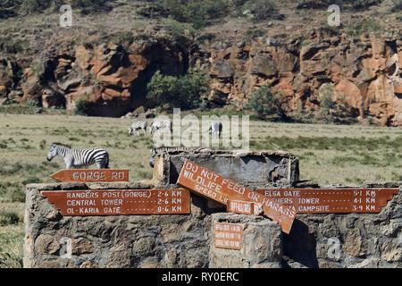 Kenya, Nakuru county, Hell's Gate National Park, zebra - Stock Image