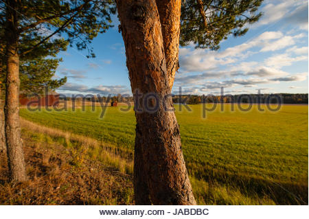 Sunny summer day with gorgeous colours. - Stock Image