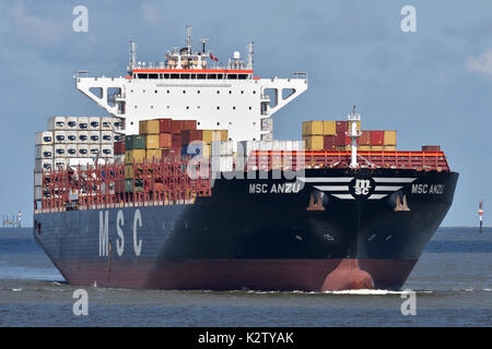 MSC Anzu - Stock Image