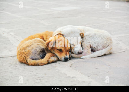 Two stray puppies warming each other in the street, Varanasi, India - Stock Image