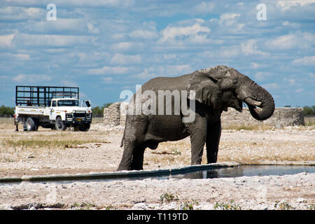 An elephant drinks at a manmade waterhole in the Etosha National Park, Namibia. - Stock Image