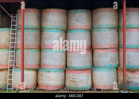 Round hay bales neatly stacked in a barn - Stock Image