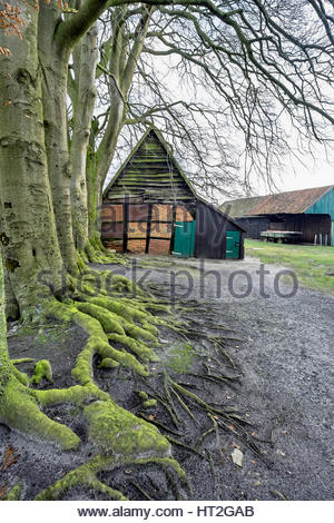 An old brick house and outbuildings with beech and oak trees, northwestern Germany. - Stock Image