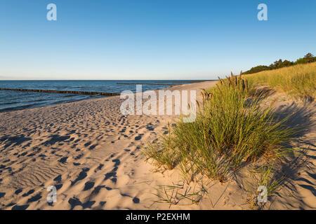 Summer, Beach, Dunes, Baltic Sea, Mecklenburg, Germany, Europe - Stock Image