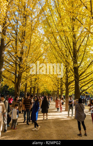Nami Island in South Korea is colourful with trees bearing autumn foliage. Populate with tourists trying to capture photos of the bright colours. - Stock Image