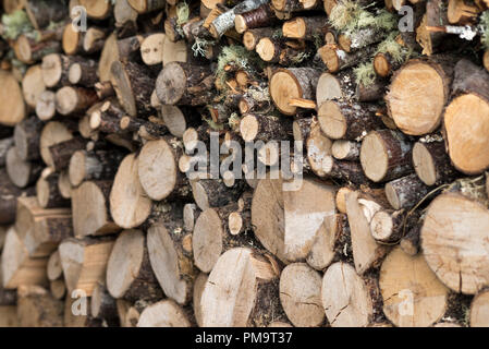 Stacked cut wood and sticks - Stock Image