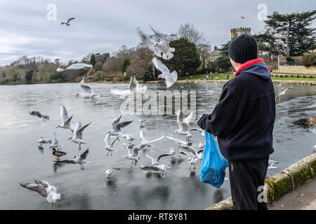 Feeding the birds at a frozen pool. - Stock Image