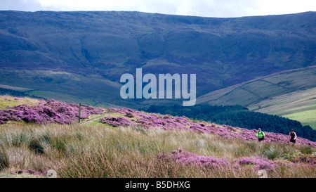 walkers The National Trust High Peak Estate William Clough right to roam Peak District National Park Derbyshire - Stock Image