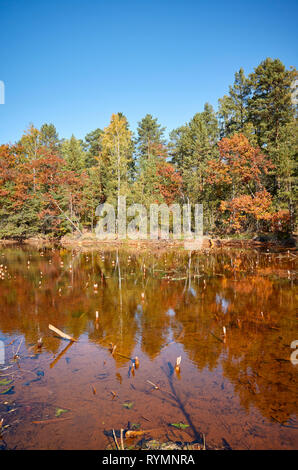 Autumnal landscape with a pond in a forest. - Stock Image