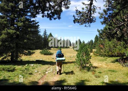France, Isere, Vercors national natural reserve, the high plateau of Vercors, Gresse en Vercors, Female hiker walking - Stock Image