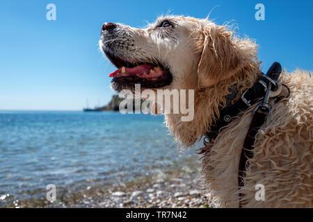 Dogs in Lulworth Cove Dorset - Stock Image