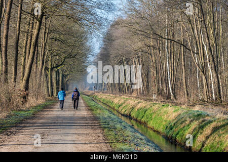 Nordic walkers on a rural road, along OHE railway network, Lachtehausen, Celle, Lower Saxony, Germany, Europe - Stock Image