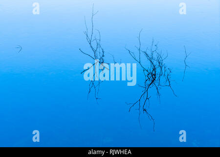 Partly submerged branches in a frozen lake - Stock Image