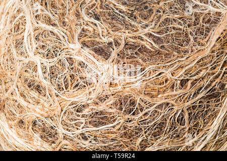 closeup of pot bound plant roots - Stock Image