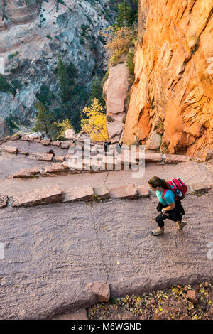 Hikers at Angels Landing Trail, Walters Wiggles switchbacks near Scout Lookout, Zion National Park, Utah, USA - Stock Image