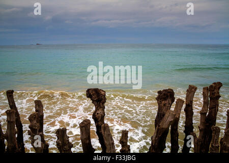 Barrier of wooden posts on a beach, Saint Malo, France, Europe. - Stock Image