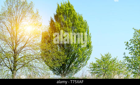 Old tree in the park in Germany - Stock Image