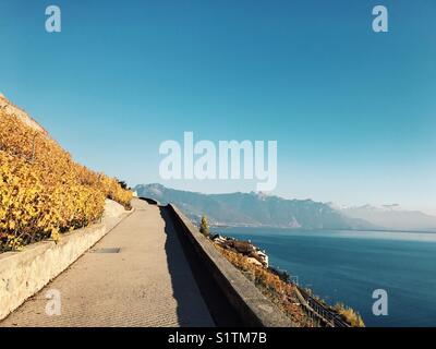 Path in the vineyard hill with lake and mountain view - Stock Image