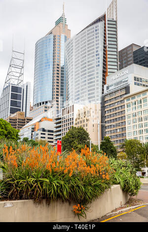 Sydney city centre and high rise tower buildings on Macquarie street,Sydney,Australia - Stock Image