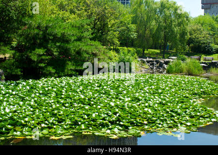 Yeouido Park in Seoul in summer, South Korea - Stock Image