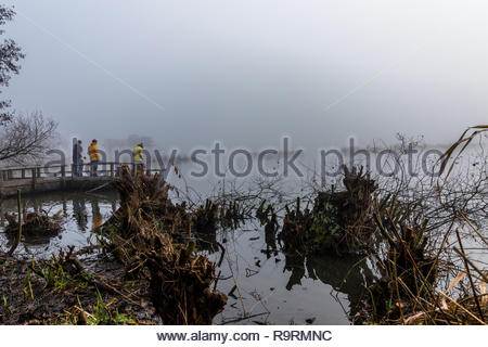 Fleet, Hampshire, UK. 27th December 2018. A group of walkers looking across a fog covered pond from a viewing platform with pollarded willow in the foreground. Credit: Images by Russell/Alamy Live News - Stock Image