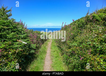 A footpath at Hellesveor Cliff, near St. Ives, Cornwall, England, UK - Stock Image