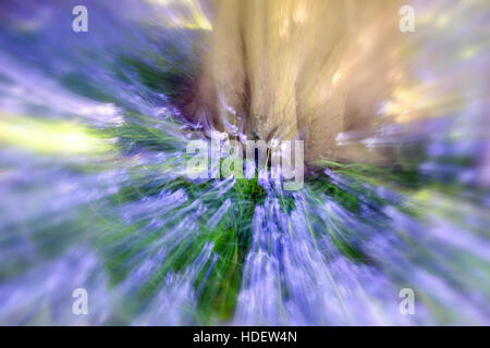 Zooming in on Bluebells under a tree taken with a long exposure - Stock Image