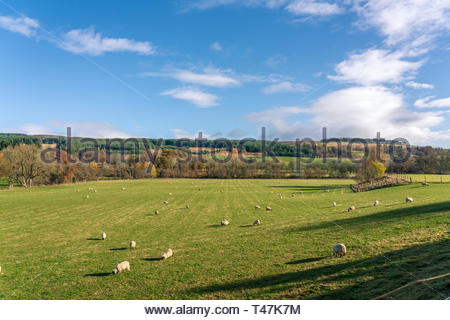 A farm in the hills of the lower Cairngorms, Perthshire, Scotland in late Autumn - Stock Image