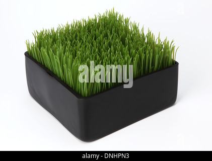A small container with green grass on a white background - Stock Image