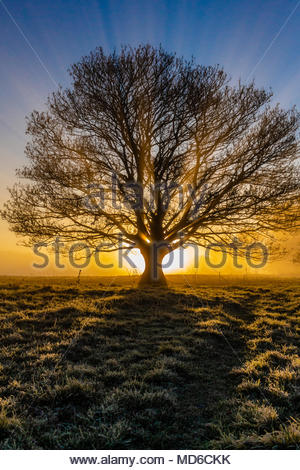 Sunrise in the village of Marnhull Dorset UK - Stock Image