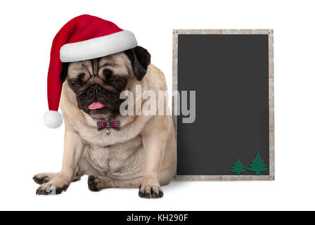 grumpy Christmas pug puppy dog with red santa hat sitting next to blank blackboard sign, isolated on white background - Stock Image