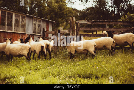 Sheep Pen - Stock Image