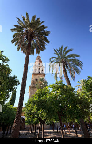 Spain, Andalucia, Cordoba, Mezquita Catedral (Mosque - Cathedral) (UNESCO Site) - Stock Image