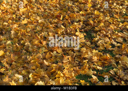 Autumn colours in the north Oxfordshire village of Hook Norton - Stock Image