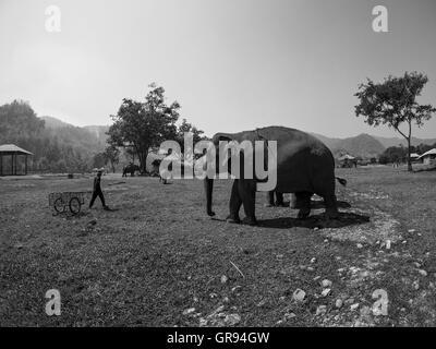 Elephants On Field Against Sky - Stock Image