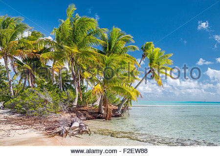 Fakarava (French Polynesia) - Stock Image