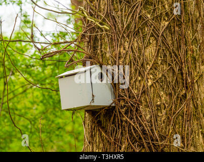 A Grey Birdhouse - Stock Image
