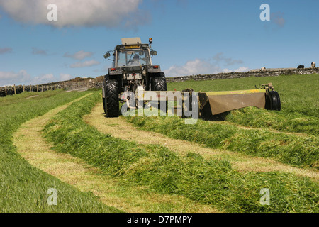 Haymaking with tractor in grass meadow.Cregneish, Isle of Man, leaving grass in rows behind tractor - Stock Image