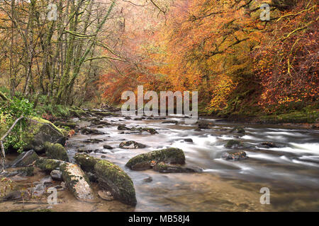 The River barle near Tarr steps in autumn Exmoor Somerset Uk - Stock Image
