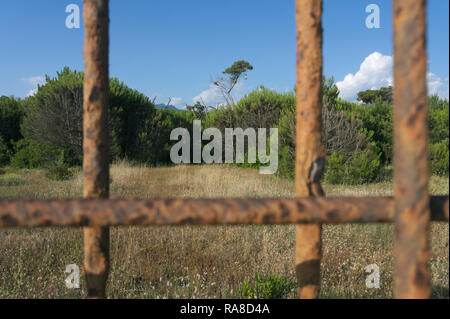 pine trees forest park behind rusty bars in Marina di Massa, Tuscany, Italy - Stock Image