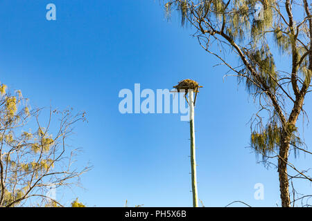 Artificial Osprey nesting platform at Mooloolaba, Sunshine  Coast, Queensland, Australia - Stock Image