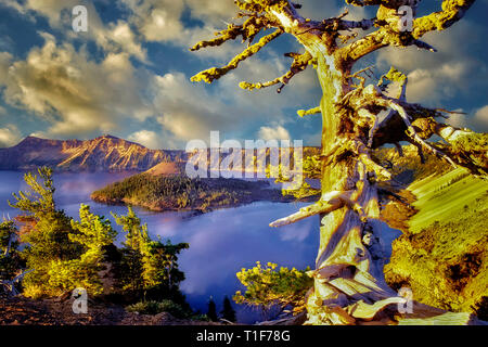 Crater Lake and Wizard Island with unigue pine. Oregon - Stock Image