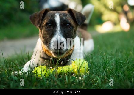 Dogs best friends of man - Stock Image