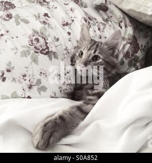 Cosy Kitten - Stock Image