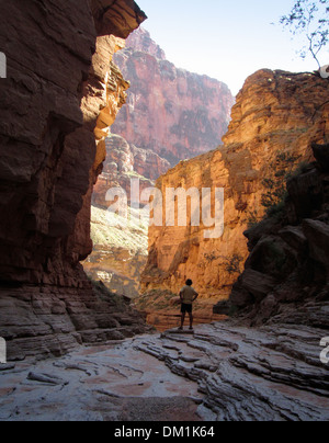 Lone hiker in the Grand Canyon stands in a side canyon glowing with reflected sunlight. - Stock Image
