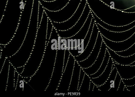 Spiders web with dew. 2000 - Stock Image