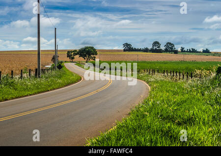 brazilian rural road - Stock Image