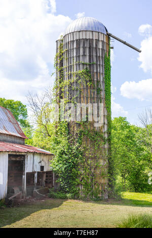 LIMESTONE, TN, USA: 4/28/19:  A dome-topped concrete stave silo, covered with ivy, and setting next to an old barn.  Sunny day. - Stock Image