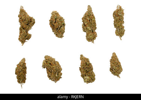 eight different shaped Cannabis sativa flower buds, isolated on white background - Stock Image